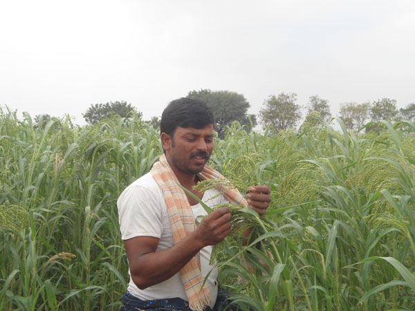Yarrisamy sells his Proso Millet harvest